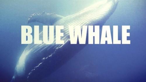 Blu Whale, i dubbi del prof Saraceni: il gioco non esiste, paliamo con i figli, ma spiarli è illegale