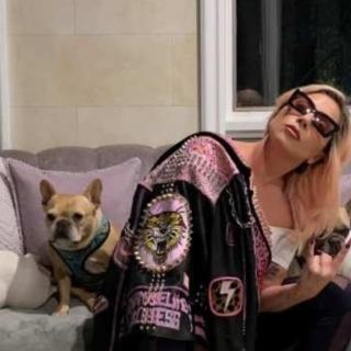 Usa - Ritrovati i cani di Lady Gaga