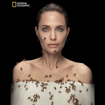 Angelina Jolie posa ricoperta di api