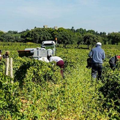Puglia, vietato lavorare nei campi dalle 12:30 alle 16