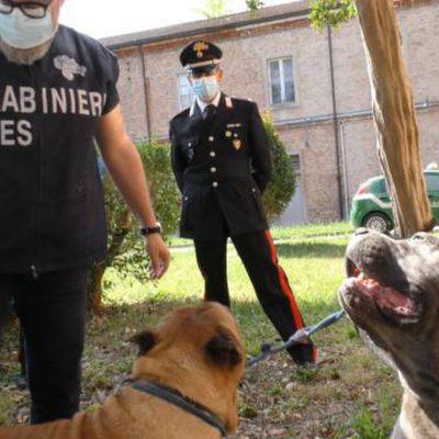 Amputazioni illegali di orecchie e code su cuccioli di cane, denunce a Bari e Matera