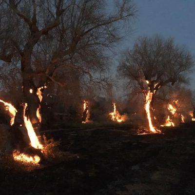 Incendi: morti in Calabria zia e nipote, tentavano di salvare dalle fiamme il loro uliveto