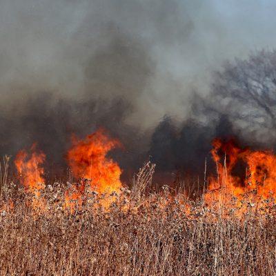 Canada, caldo record: 719 morti in una settimana e centinaia di boschi in fiamme