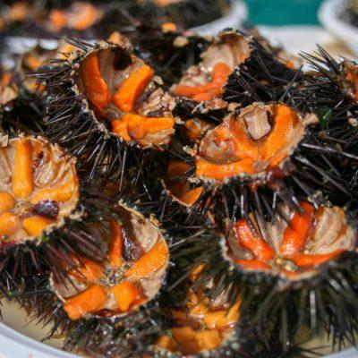 Pesca di ricci proibita, multato pescatore di frodo alle Tremiti