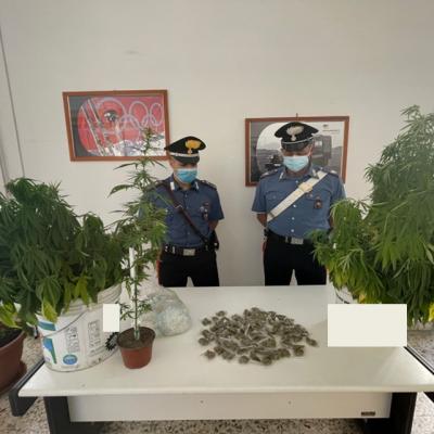 Barletta, coltiva e spaccia marijuana nonostante i domiciliari: in manette 22enne