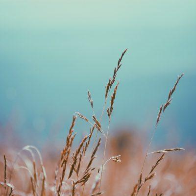 Basilicata, stop al lavoro agricolo nei campi nelle ore più calde fino a fine agosto