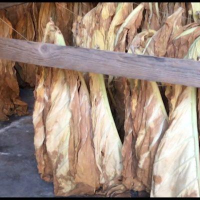 Il Museo delle Tabacchine a Campi Salentina