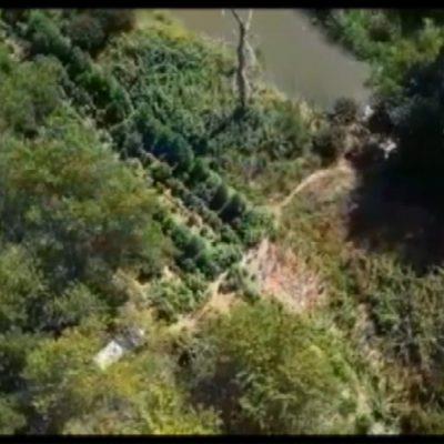 Droga, maxi operazione tra Foggiano e Nord Barese: 15 arresti