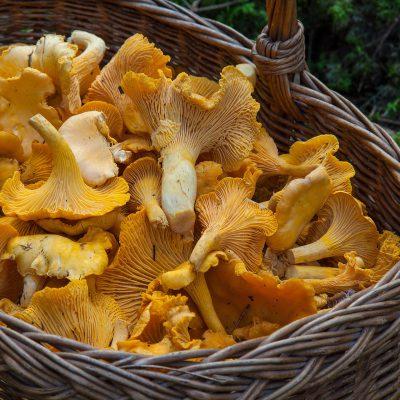 Piogge autunnali: è boom di funghi